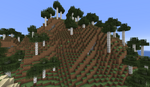 800px-Tall Birch Forest