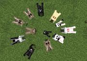 Especies de conejos pasivos