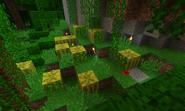 Melones generados en la jungla