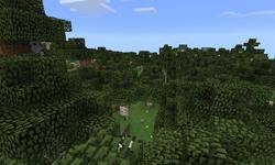Bosque de abedules cubriendo un gran terreno.