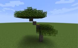 Acacia de dosel superior