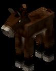Cría de mula
