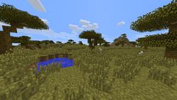 Acacias-jungla