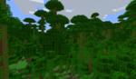 800px-Jungle