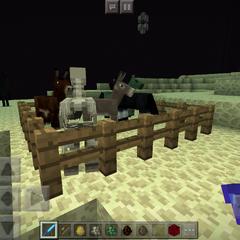New Horse Model