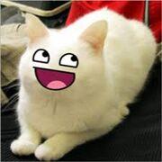 Cat xdd