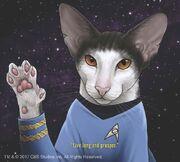 Star-trek-cats-1