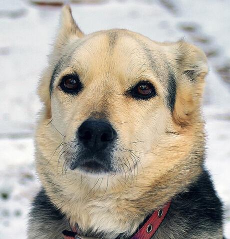 File:Beautiful Dog.jpg