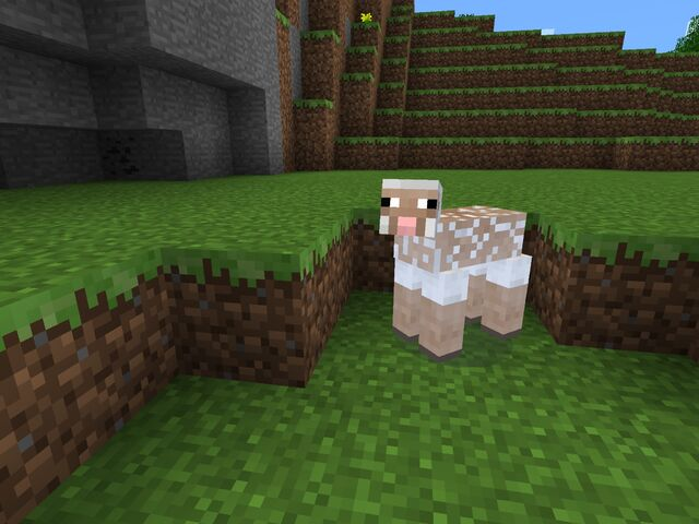 File:Sheep Sheared.jpg