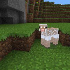 A Sheared <a href=