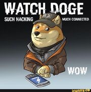 Doge of watching