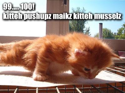 99-100-kitteh-pushupz-maikz-kitteh-musselz