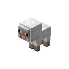<i>Sheep</i> pet.
