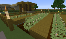 Potato Farm