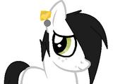 Jhon (Hack - Pony)