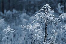 Quot-plantas-congeladas-en-el-campo-quot 1161-150
