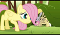 628px-Fluttershy.png