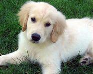 McKenzie Puppy 2