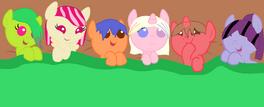 Bebes Pony en adopcion