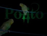 Polito wallpaper 2