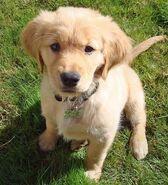 McKenzie Puppy 3