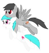 Cotton Heart - Brady flying