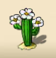 Desert cactus with a white blossom