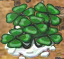 Lucky Clovers (Plant)