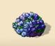Purple Pompom Bush