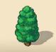 Pompom Cypress