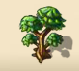 Evergreen Pine