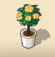 Yellow Rose Tree
