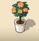 Orange Rose Tree