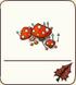 Fly Agaric