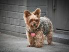CG2Q5557-Miranda-Kerr-dog-Frankie02