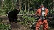 Miscreated-black bear