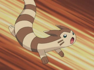 Furret anime
