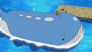 Wailord anime