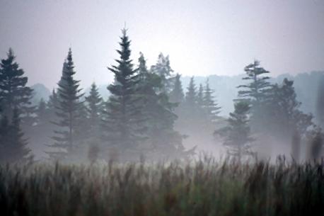 File:Freeland mist.jpg