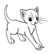 Medicine Cat Apprentice (1)