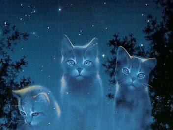 Wallpaper-StarCats