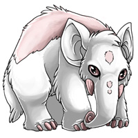 Albino eledon