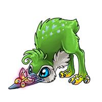 Baby nokwi