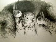Larchlings