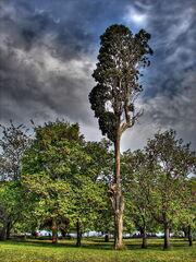 Fenerbahce Park 05414 tree