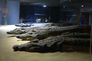The Crocodile Museum 0283 d1