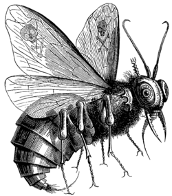 Belcebú mosca