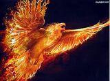 Żar ptak