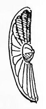 Spanischer Rundschild 15. Jh, kriegswaffen00demmin, p.561, Fig.20