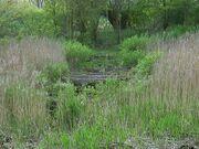 Satzer Moor Bohlenweg